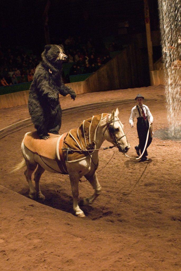 centre equestre zingaro